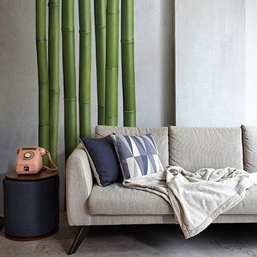 Sticker bambous derrière un canapé