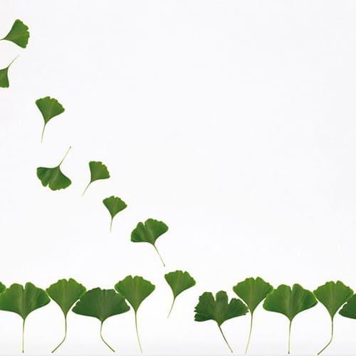 Sticker feuilles vertes pour déco maison