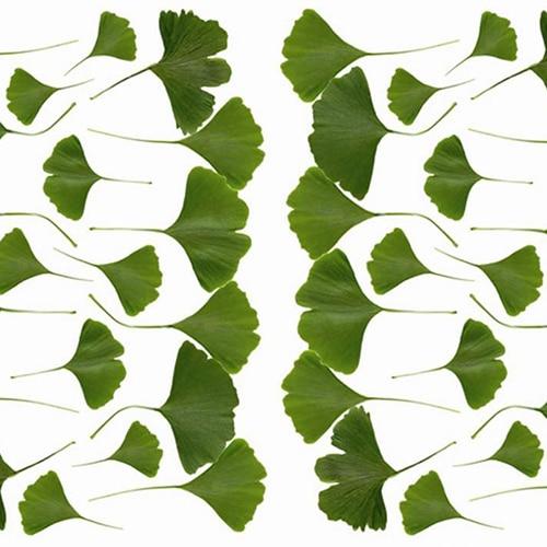 Sticker autocollant feuilles vertes