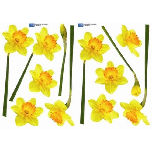 Sticker fleur Jonquilles