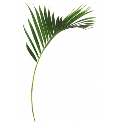 Sticker feuille de palmier pour déco maison