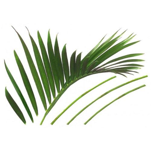 Sticker feuille de palmier pour déco de la maison