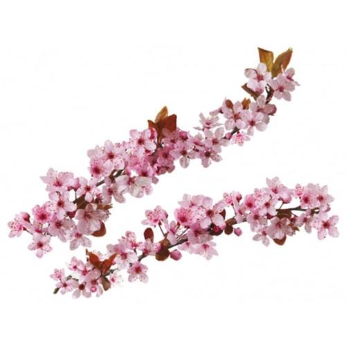 Adhésif mural Branches de Cerisier Japonais