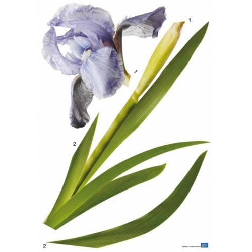 Autocollant fleur Iris bleus géant