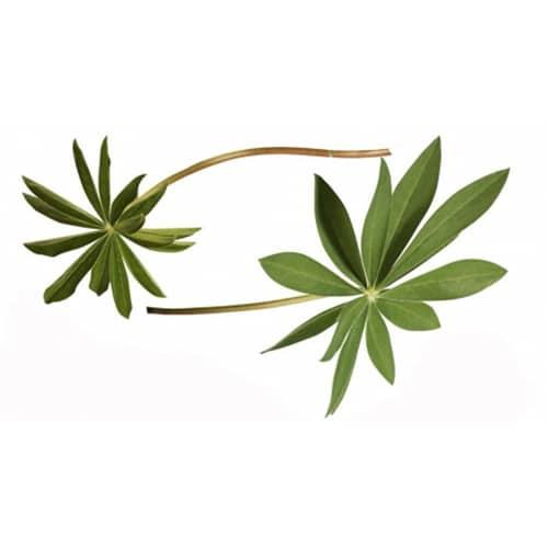 Sticker feuilles de lupin pour décoration de la maison