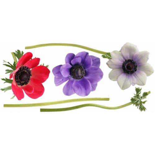 Sticker géant fleur anémones rouge violet et blanc