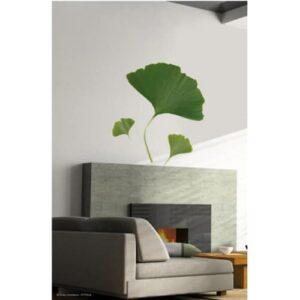 stickers muraux feuilles de Ginkgo Biloba sur un mur blanc