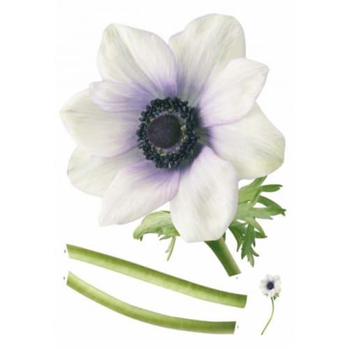 Sticker adhésif Fleur d'Anémone Blanche