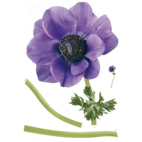 Sticker Fleur d'anémone géant