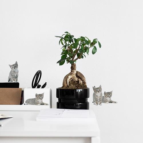Mini stickers adhésifs de chatons dans un bureau