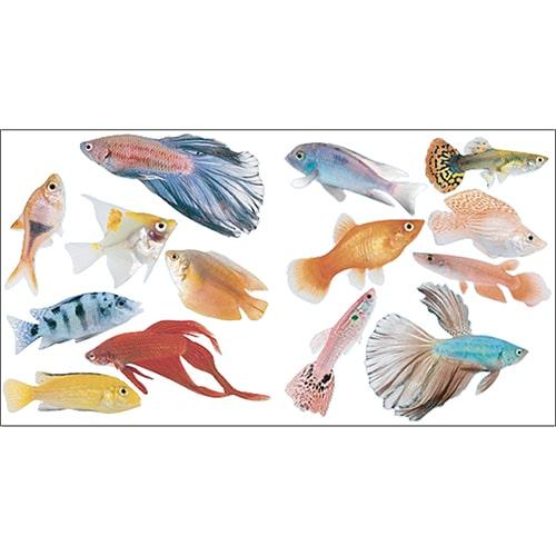 Stickers muraux poissons colorés