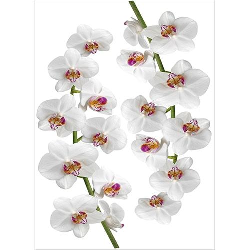 Sticker Orchidées blanches et roses à coller