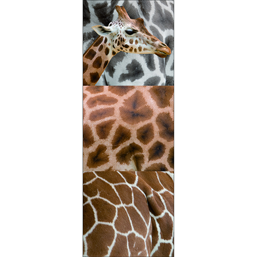 Planche adhésive girafe à coller