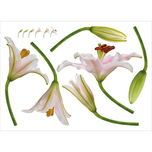 Sticker Planche Éclosion Fleur pour décoration intérieur