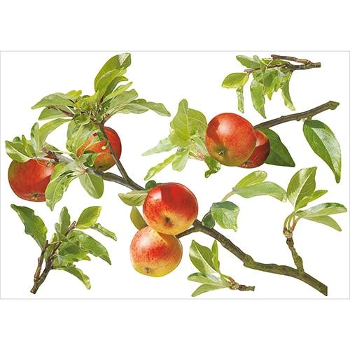 Sticker Planche Pommes sur la Branche à coller sur un mur