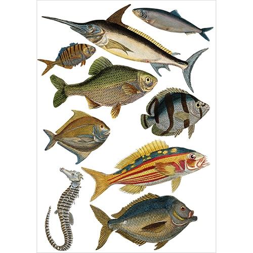 Stickers poissons espadon, hippocampe, maquereau