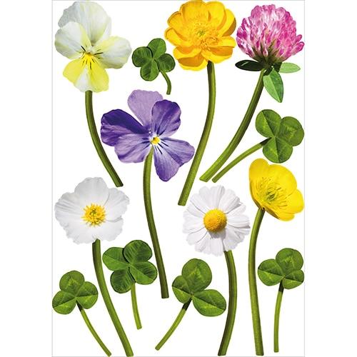 Stickers autocollants Fleurs des Champs de couleurs