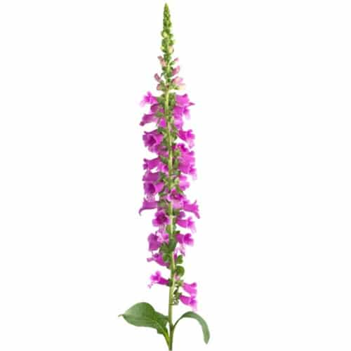 Sticker autocollant de fleur géante Violettes