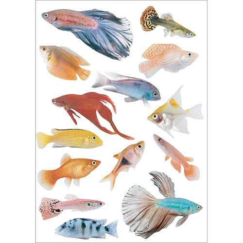 Autocollants poissons tropicaux à collé au mur