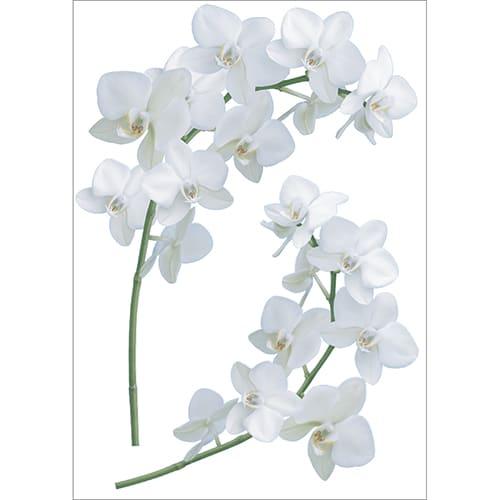 Sticker déco de branche d'Orchidées blanches à collé sur un mur