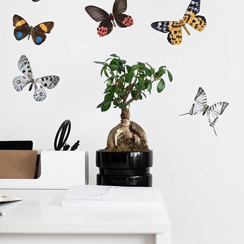 Autocollant déco papillons collé sur un mur de bureau