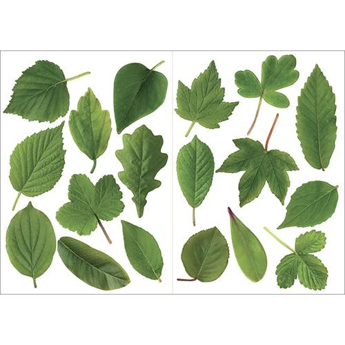 stickers autocollant de feuilles vertes à coller au mur