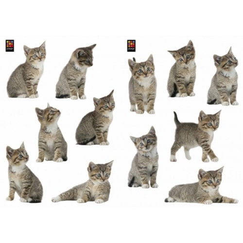 Lot de 12 Stickers chaton
