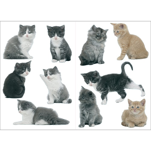 Set de 10 stickers de chatons à coller au mur