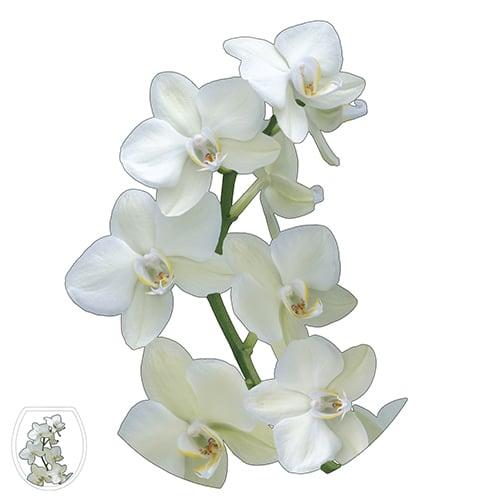 Optez pour une touche de fleurs avec notre sticker Orchidée !