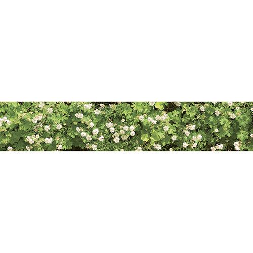 Sticker mur végétal de fleurs pour décoration contremarches d'escalier en bois mur blanc