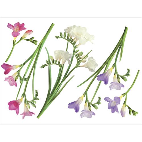 Sticker déco électrostatiques pour vitres et miroirs Fresia rose violet blanc pour déco de fenêtre