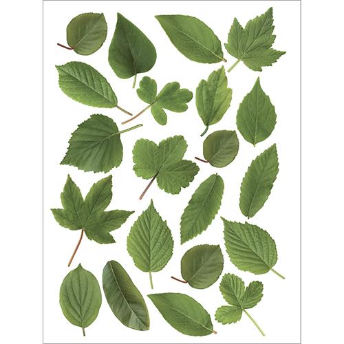 Planche de Stickers adhésifs Herbier feuilles vertes pour déco de fenêtres et vitres