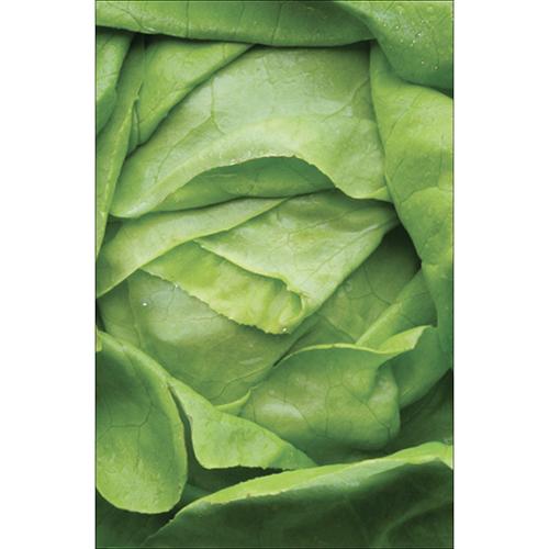 Autocollant déco d'électroménager salade verte