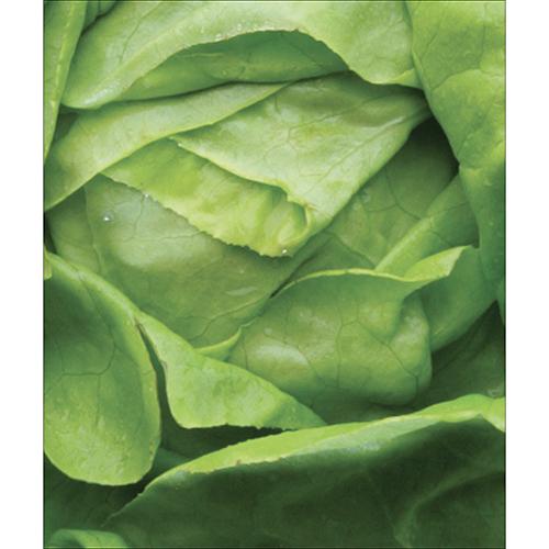 Sticker pour déco lave vaisselle salade verte