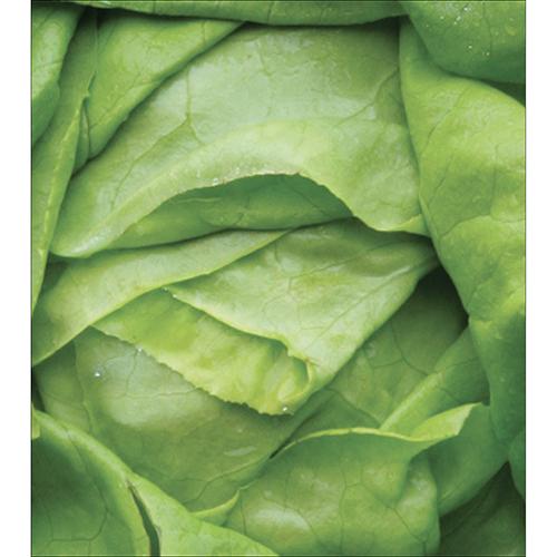 Sticker salade verte pour décoration de placard de cuisine