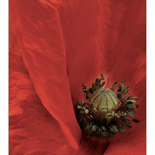 Sticker autocollant décoratif pour placards modèle coquelicot rouge