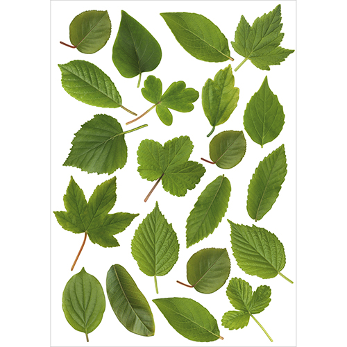 Ensemble stickers herbier