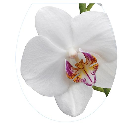 Sticker adhésif pour abattant de WC motif fleur orchidée