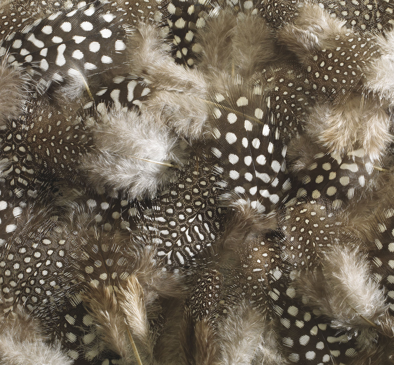 panoramique plumes grises à pois blancs