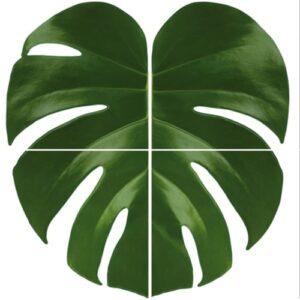 sticker Fleur de Monstera Urban Jungle pour carrelage